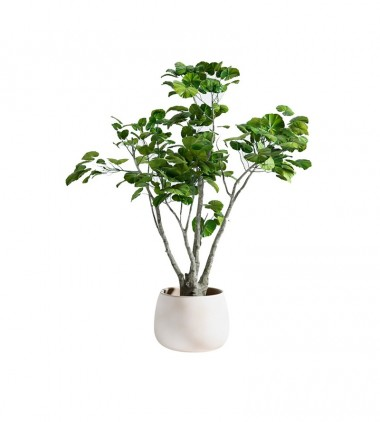 Outdoor Plant