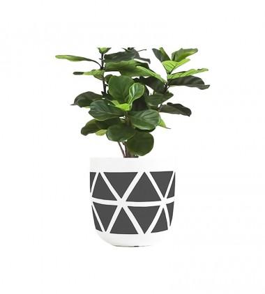 Live Plant
