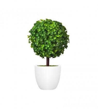 Natural Live Plant